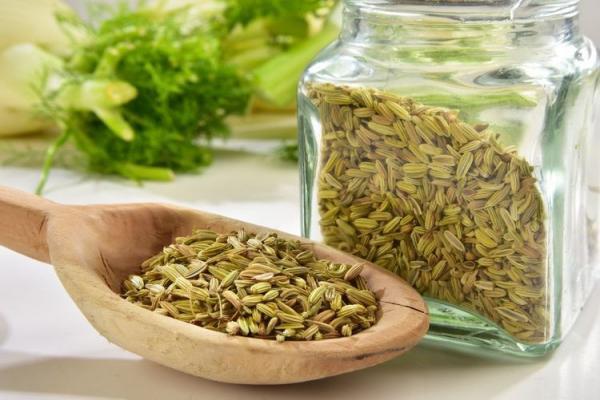 گیاه رازیانه، از خواص تا کاشت و برداشت در منزل!